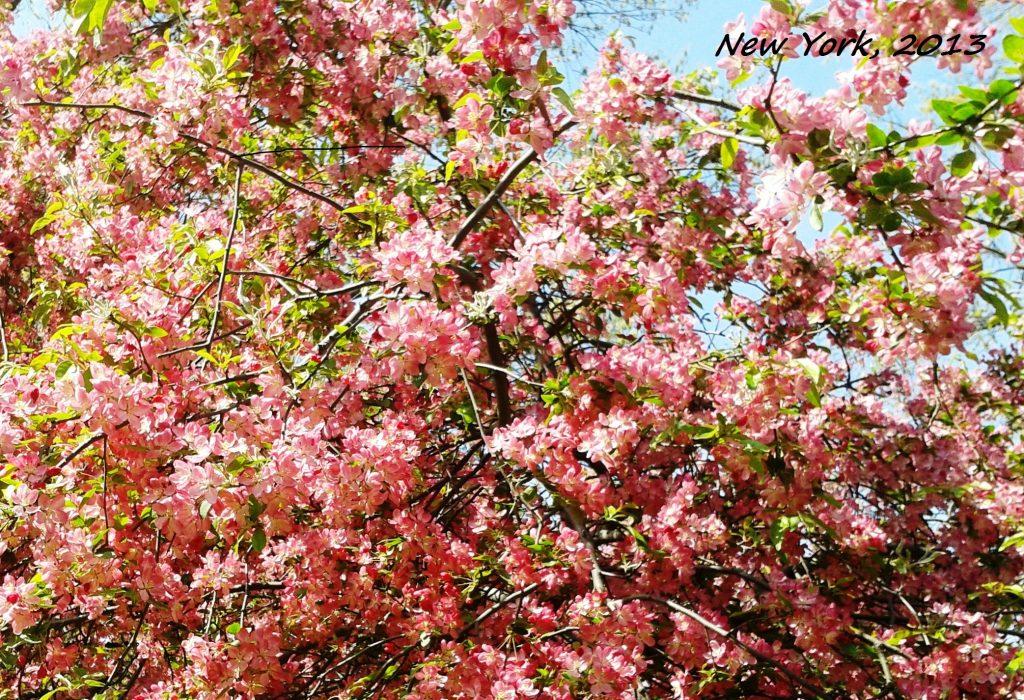 pink - Copia